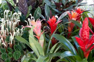 plantas complejonova